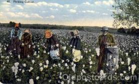 bla001132 - Picking Cotton, Black Blacks Postcard Post Card