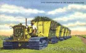 bla001147 - Florida Everglades Florida Everglades, Black Blacks Postcard Post Card