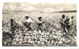 bla001201 - Pineapples, Hawaiian Islands Black Blacks Postcard Post Card