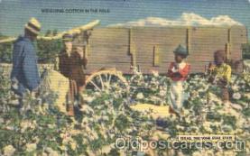 bla001312 - Weighing cotton Black, Blacks Postcard Post Card