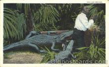 bla001348 - Florida Artistic Series Black, Blacks Postcard Post Card