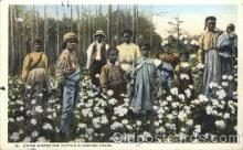 The cotton Blossoms Grow, Atlanta, Ga., USA