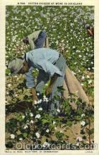 bla001488 - Cotton pickers in Dixeland Black, Blacks Post Card Post Card