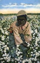 bla001511 - Cotton field Black, Blacks Post Card Post Card