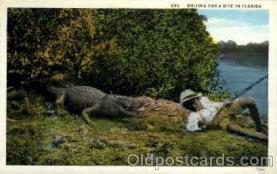 bla001570 - Black, Blacks Post Card Post Card