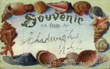 bor001024 - Chadwick, NY, USA Shells, Shell Border, Postcard Post Card
