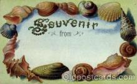 bor001038 - Shells, Shell Border, Postcard Post Card