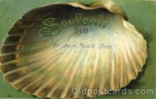 bor001039 - Lalisbury Beach, Mass, Massachusetts, USA Shells, Shell Border, Postcard Post Card