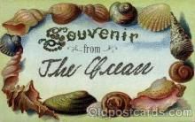 bor001044 - Shells, Shell Border, Postcard Post Card
