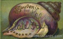 bor001074 - The State Fair Shells, Shell Border, Postcard Post Card