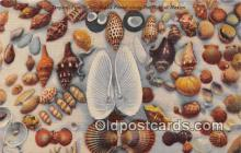 bor001091 - Shells, Vintage Collectable Postcards