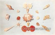 bor001097 - Shells, Vintage Collectable Postcards