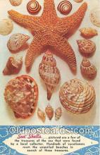 bor001103 - Shells, Vintage Collectable Postcards