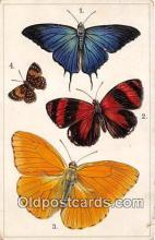 Pseudolyceana Marsyas, Catagramma Piteas, Phoebis Rovata, Lemonius Emyluis