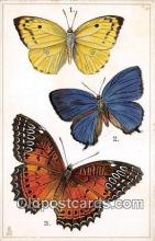 but000029 - Callidryas Catilla, Arhopala Ribbel, Gethosia Biblis Asia Postcard Post Card