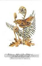 Polyphemus Moth & Fern Fiddleheads