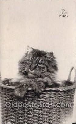 cat001725