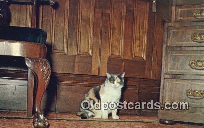 cat001933