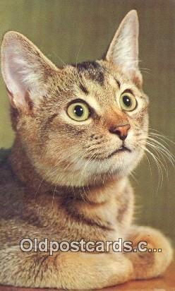 cat001964
