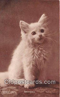 cat002096