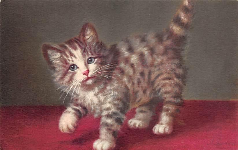 cat002212