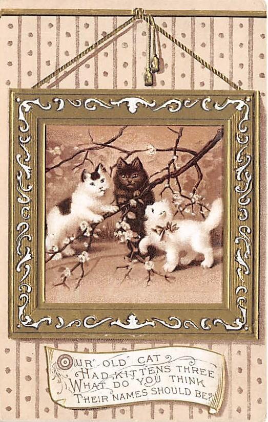 cat002253