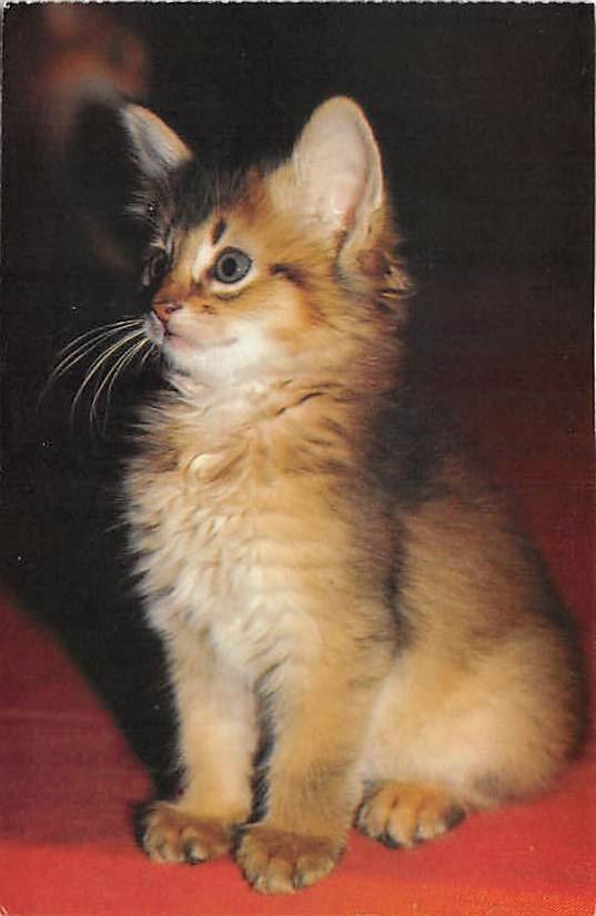 cat002260