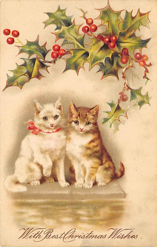 cat300167