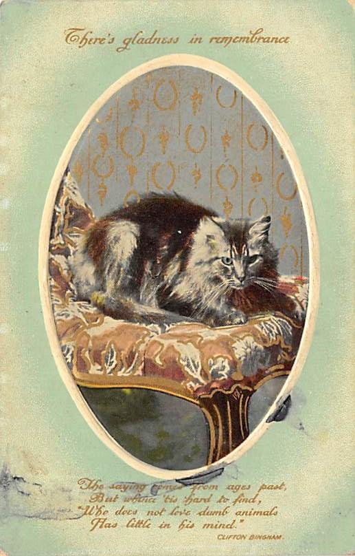 cat300169