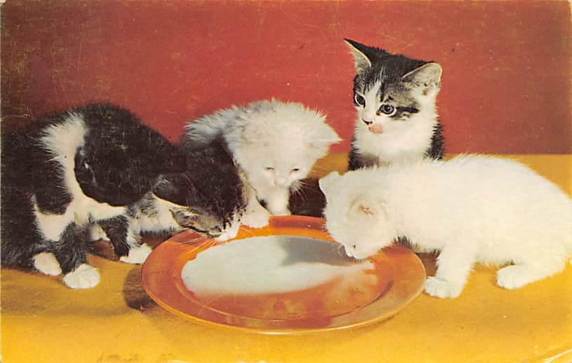 cat300271