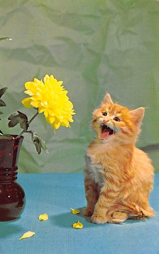 cat300281
