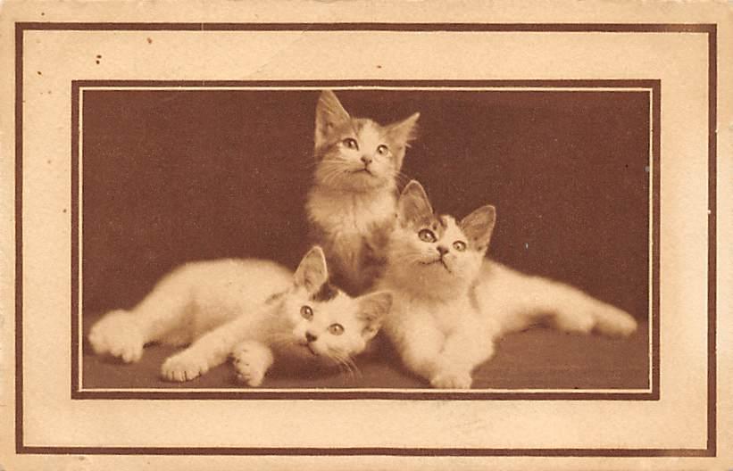 cat300383
