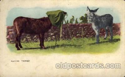cam001170 - Camera Post Card Postcard