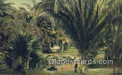 cam001891 - Castleton Gardens Jamaica Camera Postcard, Post Card Old Vintage Antique