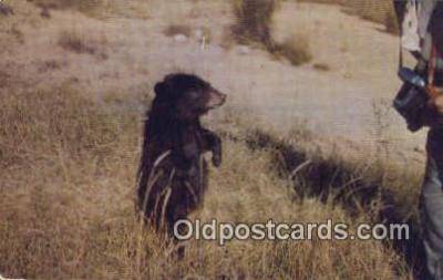 cam100018 - Camera Postcard Post Card Old Vintage Antique