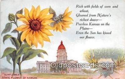 cap002537 - Sunflower Kansas, USA Postcard Post Card