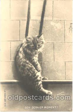 cat001107 - Cat Cats Postcard Post Card
