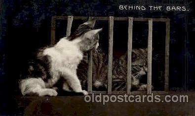 cat001160 - Cat Cats Postcard Post Card