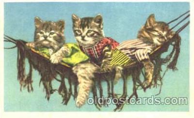 cat001222 - Cat, Cats Postcard Post Card