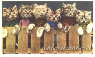 cat001223 - Cat, Cats Postcard Post Card