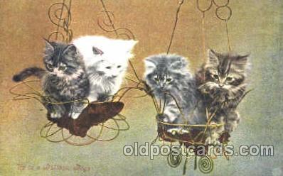 cat001228 - Cat, Cats Postcard Post Card