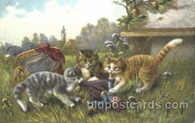 cat001236 - Cat, Cats Postcard Post Card