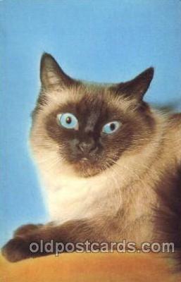 cat001269 - Cat, Cats, Postcard Post Card