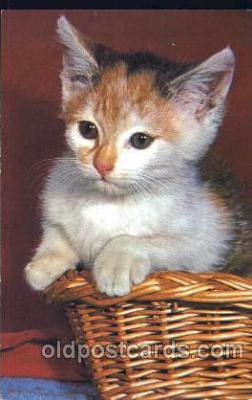 cat001271 - Cat, Cats, Postcard Post Card