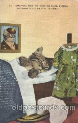 cat001281 - Cat, Cats, Postcard Post Card