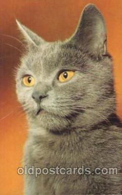 cat001289 - Cat, Cats, Postcard Post Card