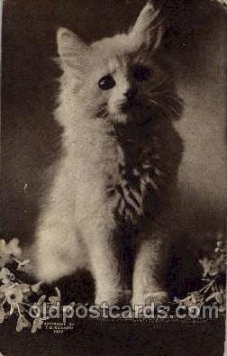 cat001352 - Cat Cats, Post Card, Post Card