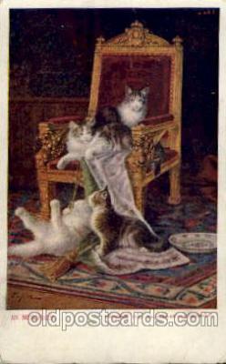 cat001354 - Cat Cats, Post Card, Post Card