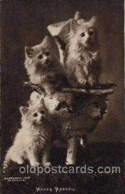 cat001361 - Cat Cats, Post Card, Post Card