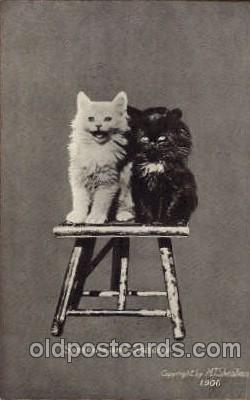 cat001363 - Cat Cats, Post Card, Post Card
